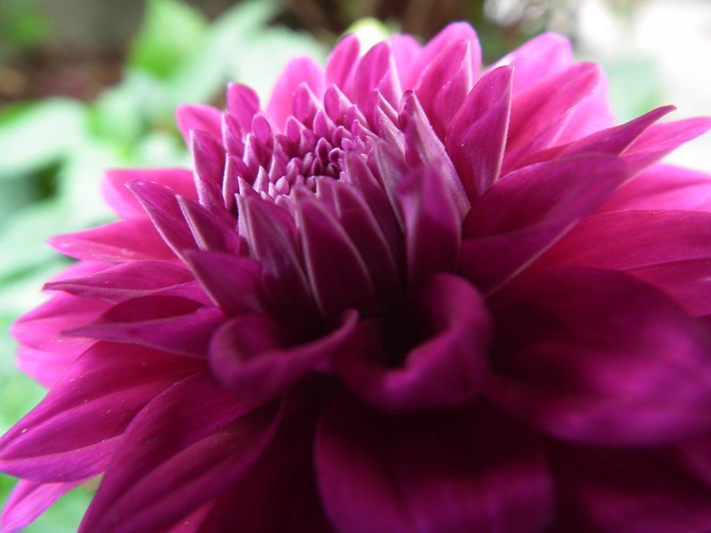 Kwiat 1